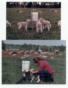 lamb creep